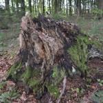 Holzstumpf von Markus Stapff