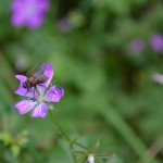 Lila Blüte von Markus Stapff